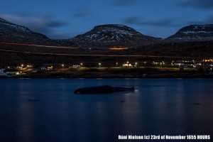 Sperm whale stranding Faroes Islands 23 November 16.55pm (c) Runi Nielsen