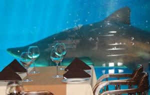 Image from uShaka Marine World