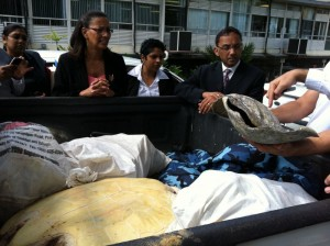 Trinidad and Tobago Government Ministers meet rescued sea turtle photo Stephen Broadbridge
