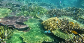 ESTABLISH A MARINE PROTECTED AREA IN THE SOUTH CHINA SEA