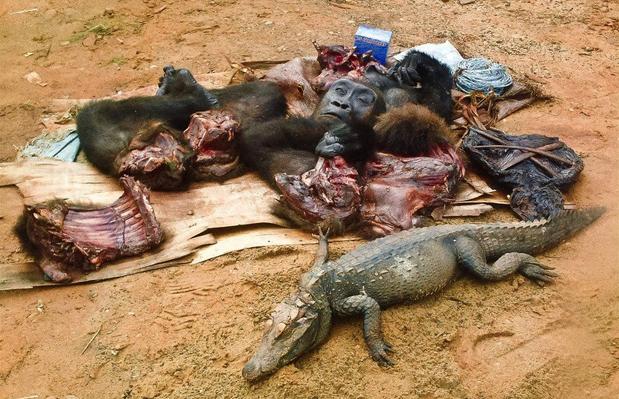 The Bushmeat Trade in Africa