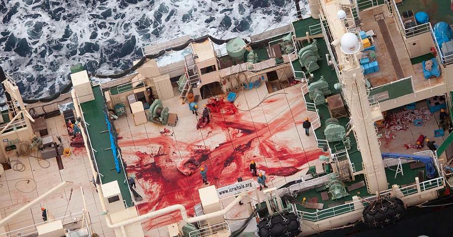 Nisshin Maru Whale Processing Ship