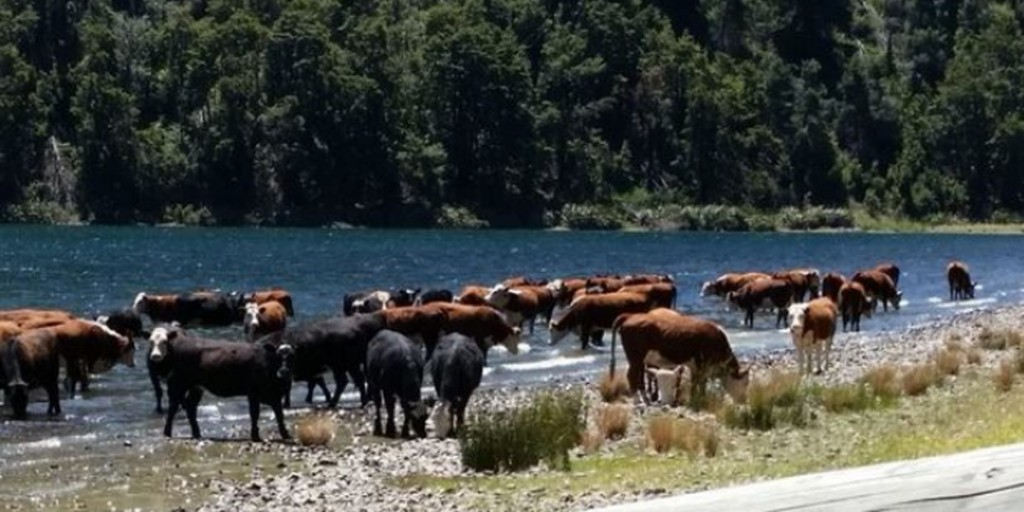 Cattle access to waterways is a major contributor to Degradation of Fresh Waters.