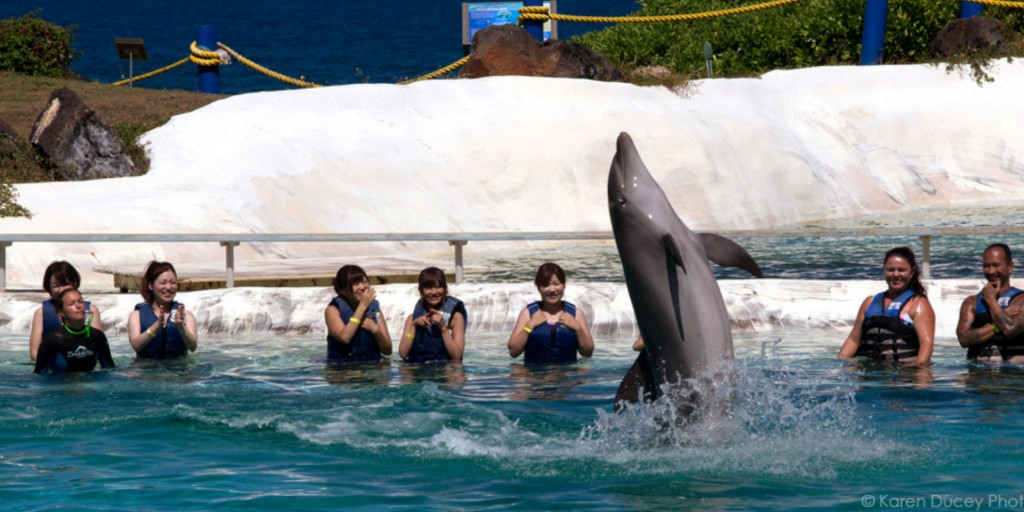 This Six Flags Amusement Park is to close its Dolphin Shows in Mexico