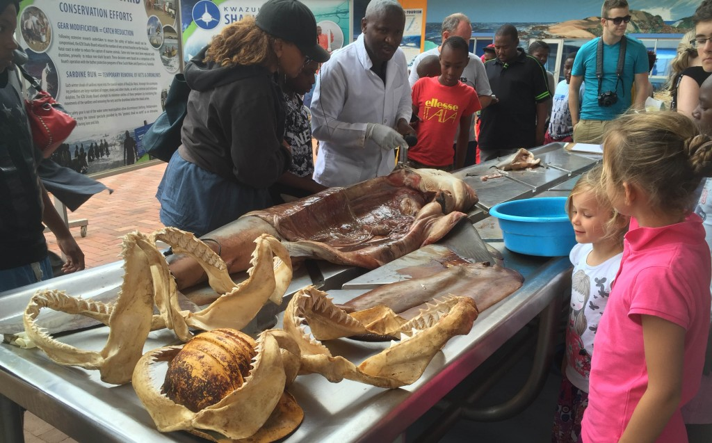 The Natal Shark Bord displays dead sharks to School groups and the public to try and justify their shark cull program